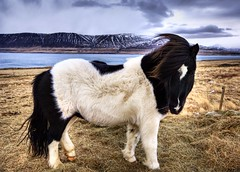 Secret horse spotting place on the fjord
