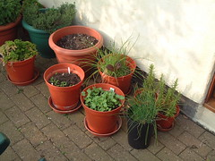 070416-herbs012