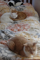 Four Cats on the Bed