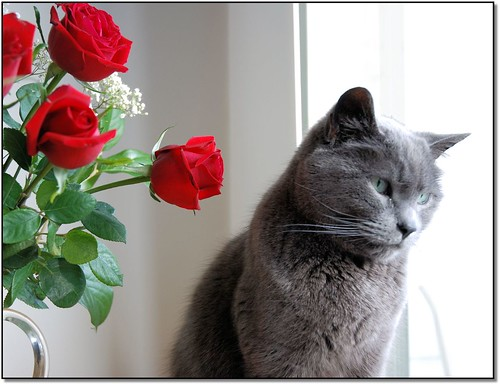 Image result for cats and roses