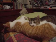 [柳丁] 你是我的抱枕 (5)