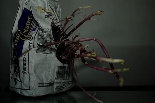 Flying Spaghetti Monster (2)