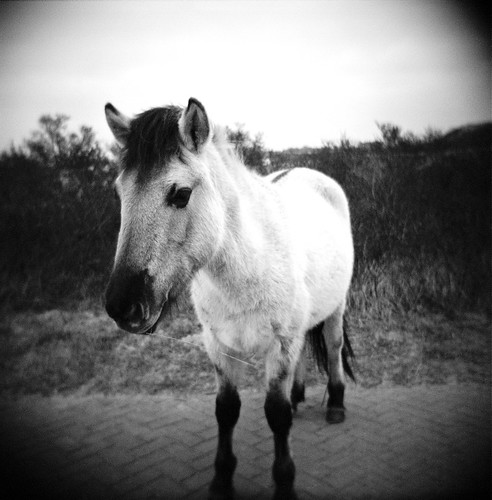 bet you a pony