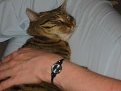 20060414 - Darren & Debbie hang out - 100-0038 - Misfit curled up on Debbie's leg