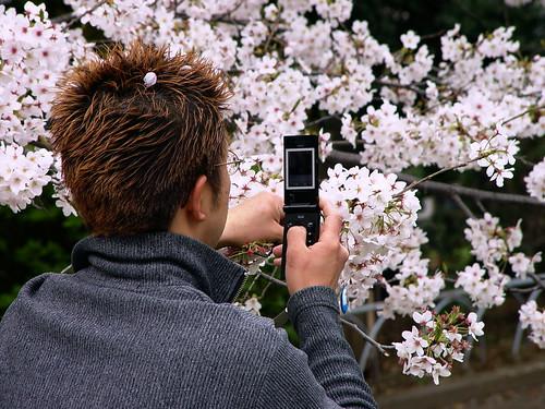 HANAMI......Sakura - さくら - Cherry Blosoms edo Gereziondoren loreak