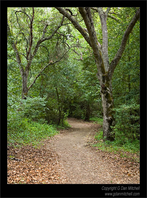 Figueroa Trail, Calero Hills