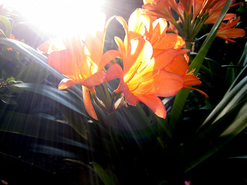 Orange flowers and sun