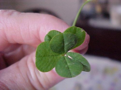 suerte Trébol de 6 hojas