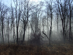 turtle woods in fog