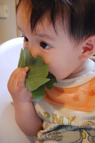 eating kashiwa-mochi