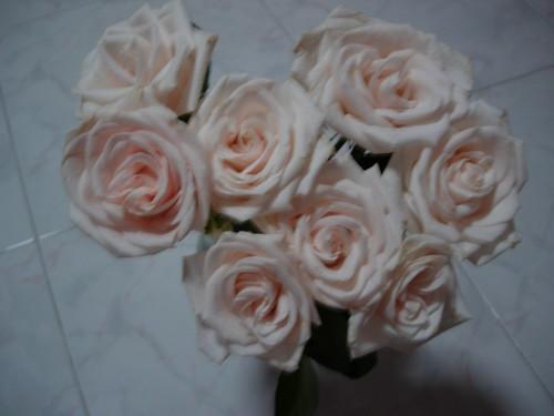 Lovely Roses1
