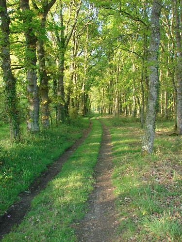 Bosque en Castro II