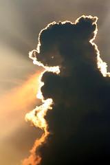 a cloud like my dog! ハチ公