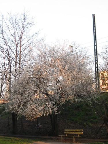 Wiosennie (biało)