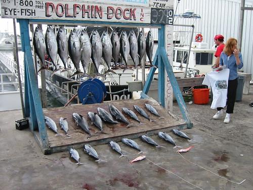 Port Aransas 2002 - Deep Sea Fishing