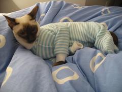 Cinny in a baby sleeper