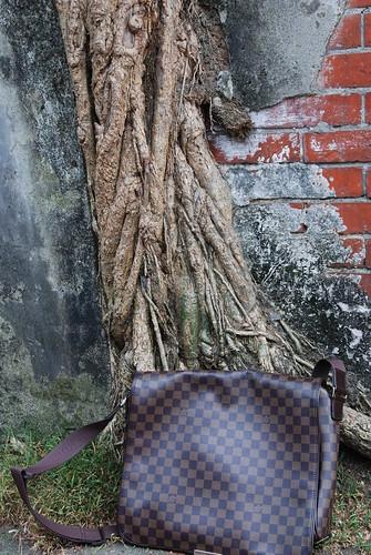 書包與樹根