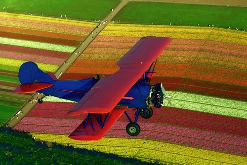 Flower Fields At Carlsbad Ranch