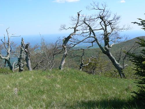 Namesake of Apple Orchard Mountain