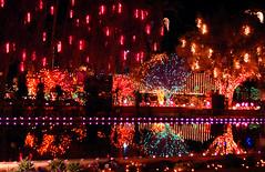 Mesa Temple Christmas lights 1