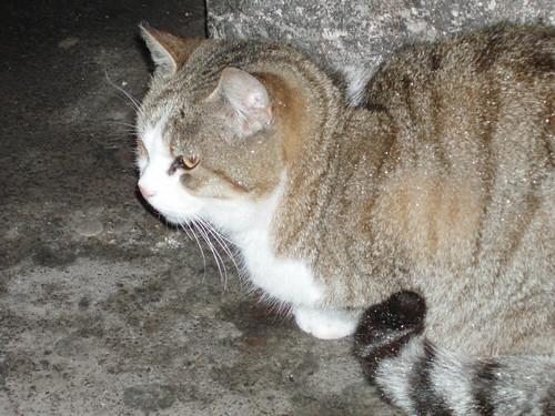 Colosseum cat