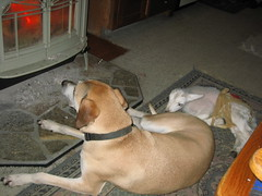 Cisco and Snickers in front of the wood stove - April 2007