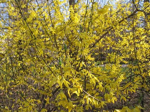 Wiosennie (żółto)