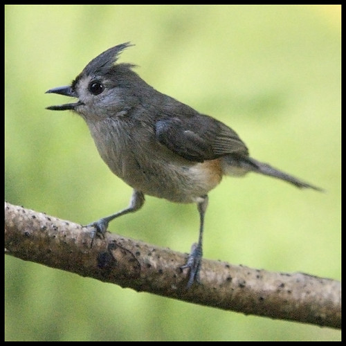 Free Bird by Southernpixel.