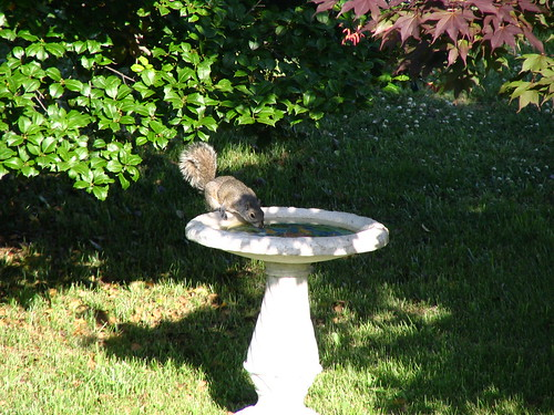 It's a Bath for Birds, not for Squirrels!