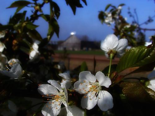 Barn & Blossoms: May 2006