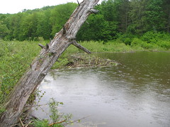 2007-05-26_ASP 063