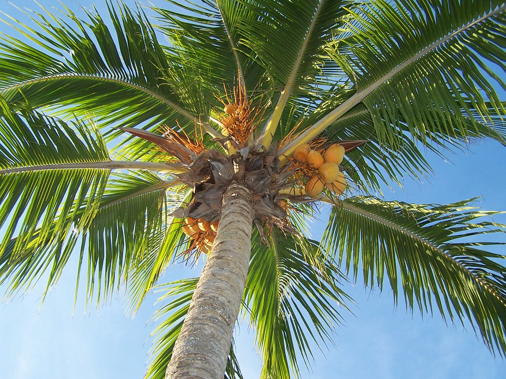 Ahhh palmtrees