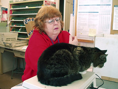 postmistress and her cat