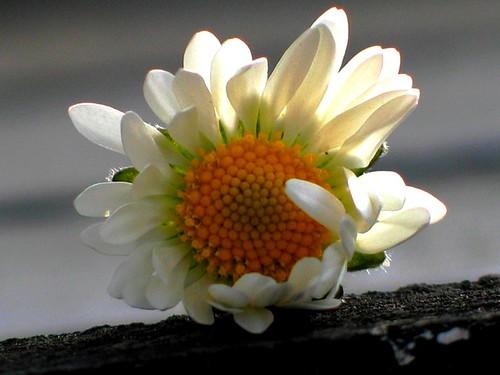2007_04_07_ausguck