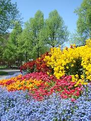 Parterres en fleurs de Montbenon