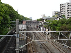 Meiji Shrine (8)