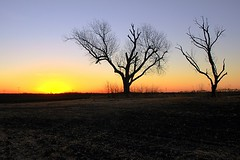 sunrise over two leafless trees