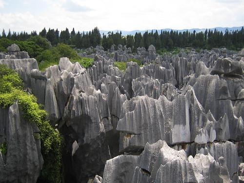 Stone Forest Horizon