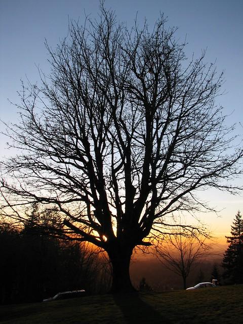 Sunset at Council Crest