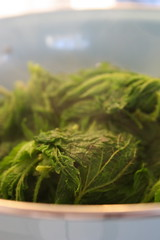 Steamed Nettles