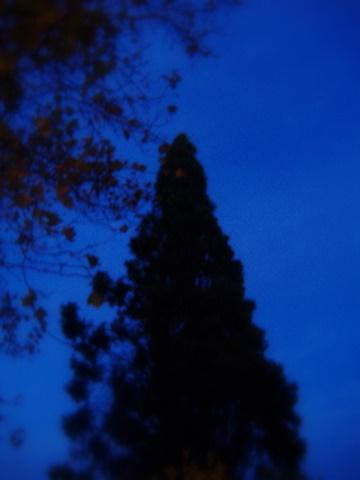 Blue Night Woods