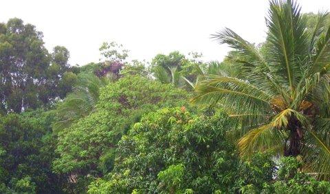 Rain May 24 07 two