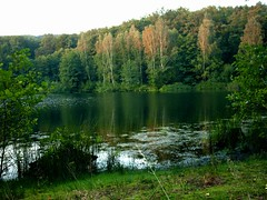 Forest lake in summer