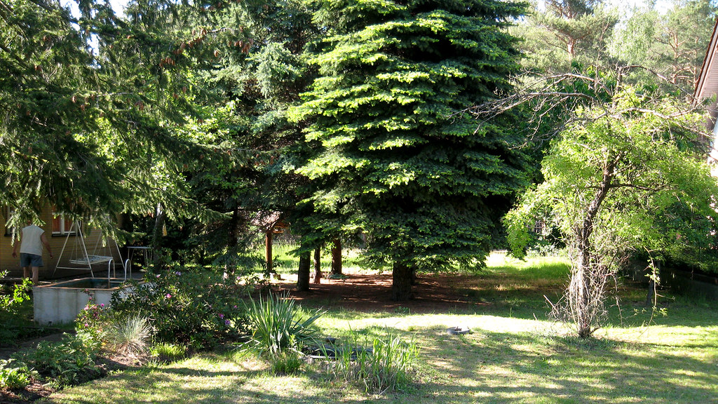 Grandpa's garden.