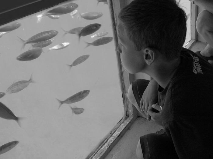 Watching the fish underwater in Lanzerote