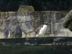 Gentoo ready for take off