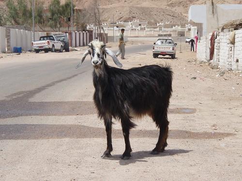 Dahab: Like Sharm, but no McDonalds... (2/4)