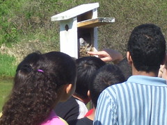 Checking the Tree Swallow Box
