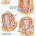larynx13