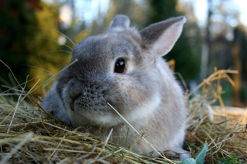cute bunny rabbit itsfordad blog different meat week